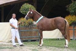 Sologn pony 2015 097